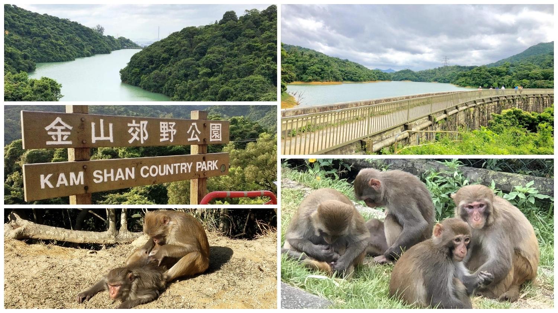 Kam Shan Country Park has 5 wow factors